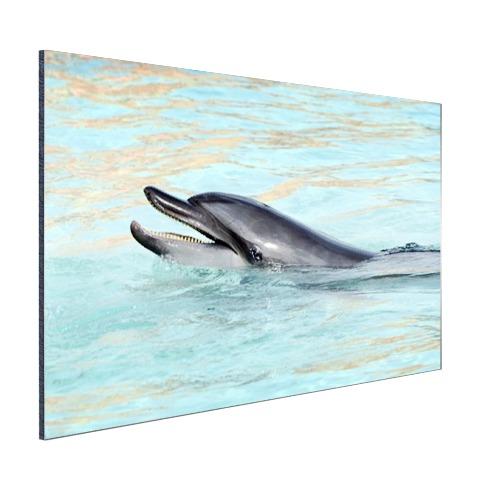 Dolfijn zwemmend fotoprint Aluminium