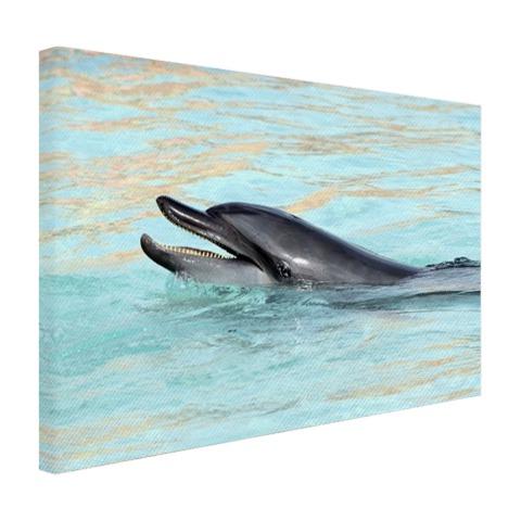 Dolfijn zwemmend fotoprint Canvas