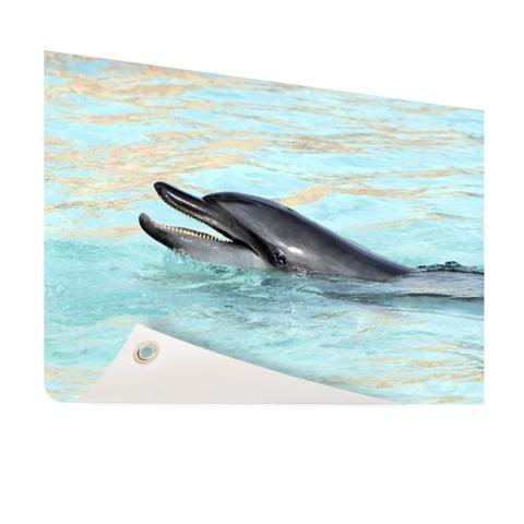 Dolfijn zwemmend fotoprint Tuinposter