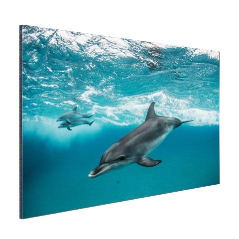 Dolfijnen zwemmend bij de Bahamas Aluminium