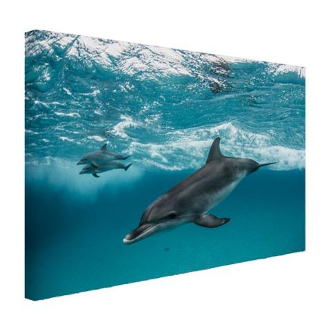 wanddecoratie dolfijn onderwaterwereld in huis