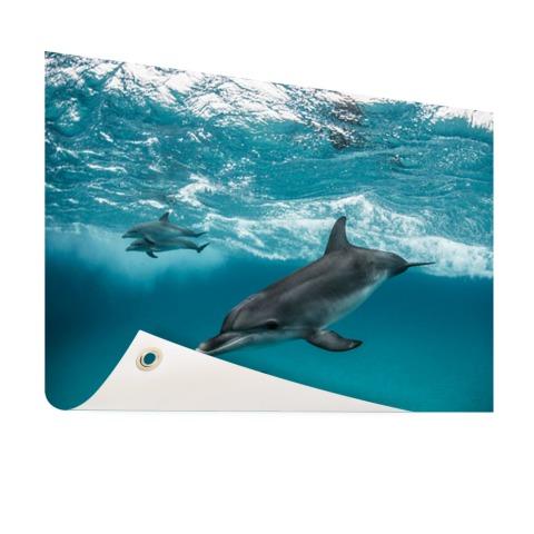 Dolfijnen zwemmend bij de Bahamas Tuinposter