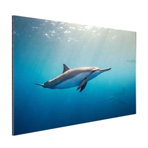Fotoprint van een dolfijn Aluminium