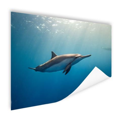 Fotoprint van een dolfijn Poster