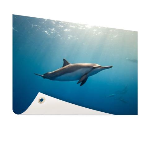 Fotoprint van een dolfijn Tuinposter