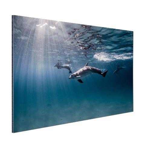 Onderwaterfoto van dolfijnen Aluminium