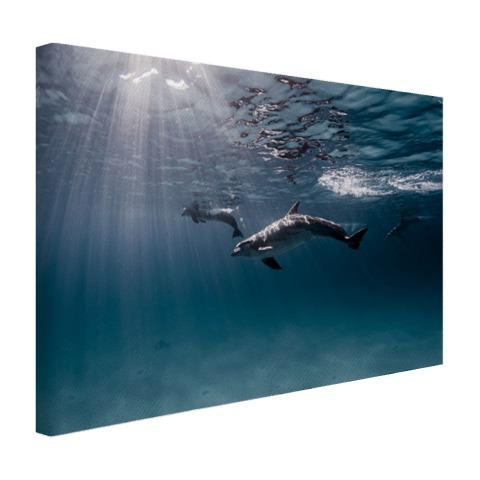 Onderwaterfoto van dolfijnen Canvas