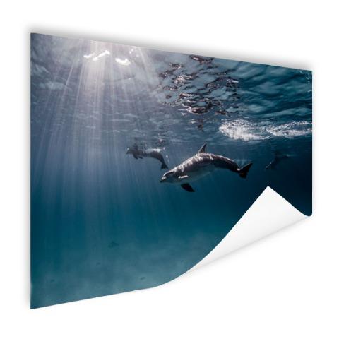 Onderwaterfoto van dolfijnen Poster