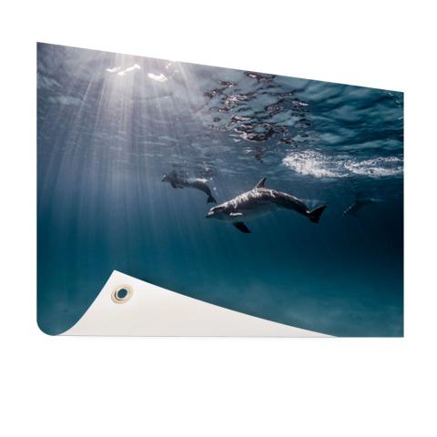 Onderwaterfoto van dolfijnen Tuinposter