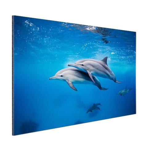 Spinner Dolfijnen in de Rode zee Egypte Aluminium
