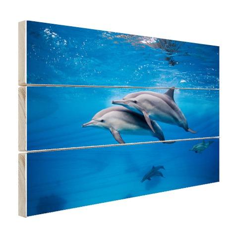Spinner Dolfijnen in de Rode zee Egypte Hout
