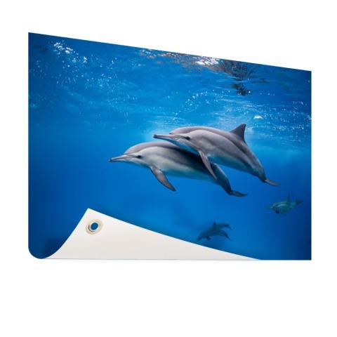 Spinner Dolfijnen in de Rode zee Egypte Tuinposter