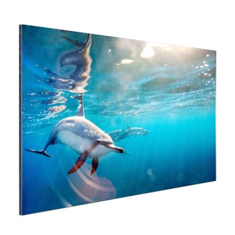 Spinner dolfijnen in helder water Aluminium