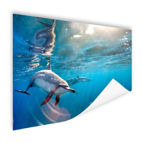 Spinner dolfijnen in helder water Poster