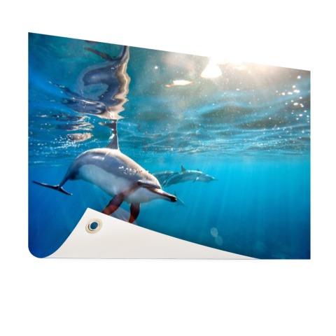 Spinner dolfijnen in helder water Tuinposter
