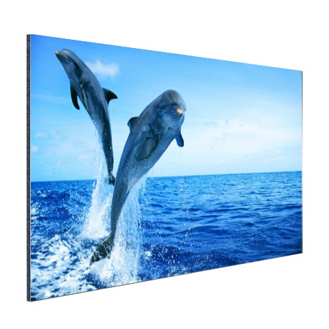 Springende dolfijnenfoto Aluminium