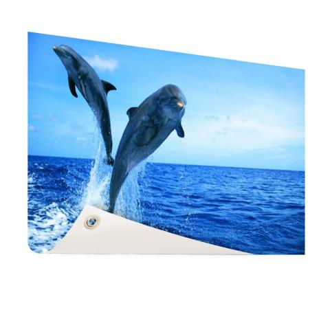 Springende dolfijnenfoto Tuinposter