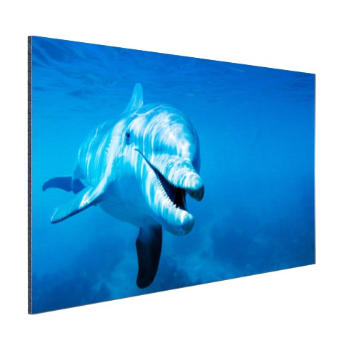 Tuimelaar dolfijn onder water Aluminium