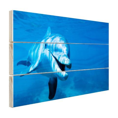 Tuimelaar dolfijn onder water Hout