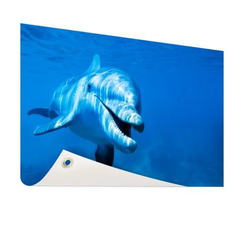 Tuimelaar dolfijn onder water Tuinposter