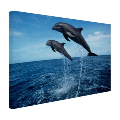 Tuimelaars springen boven het water Canvas