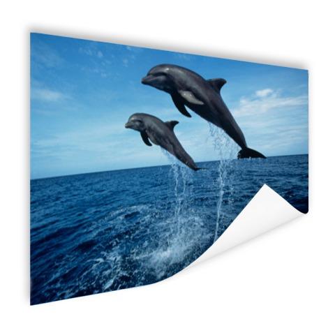 Tuimelaars springen boven het water Poster