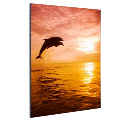 Twee dolfijnen bij zonsondergang foto Aluminium