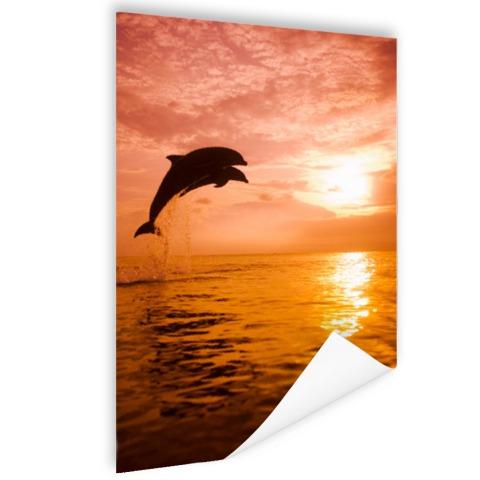 Twee dolfijnen bij zonsondergang foto Poster