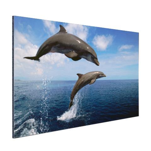 Twee springende dolfijnen in het water Aluminium