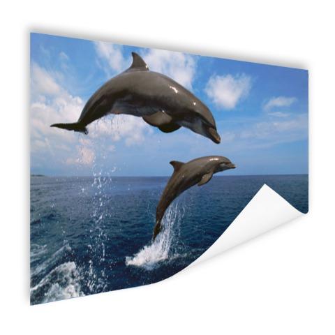 Twee springende dolfijnen in het water Poster