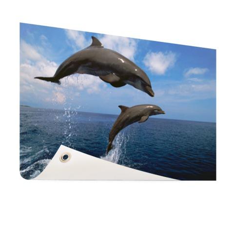 Twee springende dolfijnen in het water Tuinposter
