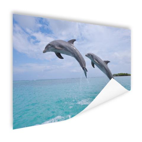 Twee springende tuimelaars Poster