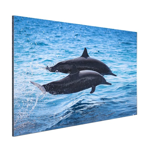 Twee tuimelaars springen boven het water Aluminium