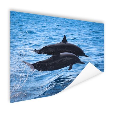 Twee tuimelaars springen boven het water Poster
