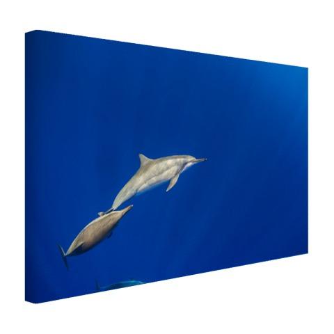 Zwemmende dolfijnen onderwater foto Canvas