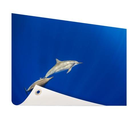 Zwemmende dolfijnen onderwater foto Tuinposter