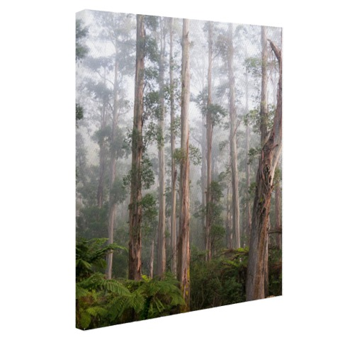 Bos Black Spur Australie Canvas
