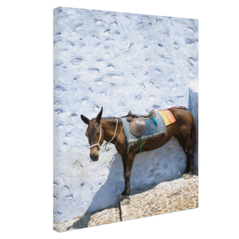 Ezel in Santorini Canvas