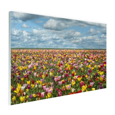 Foto tulpenvelden in Oregon op glas geprint