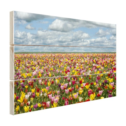 Foto tulpenvelden in Oregon op hout geprint