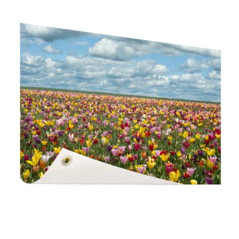 Foto tulpenvelden in Oregon op tuinposter geprint