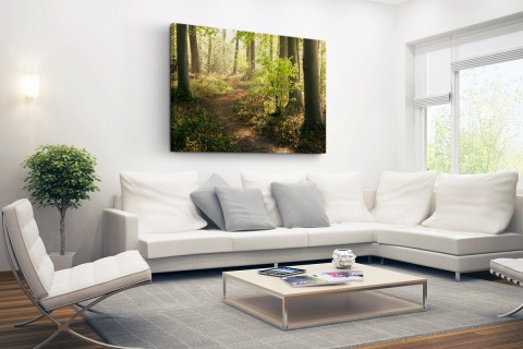 Pad in het bos fotoprint Canvas