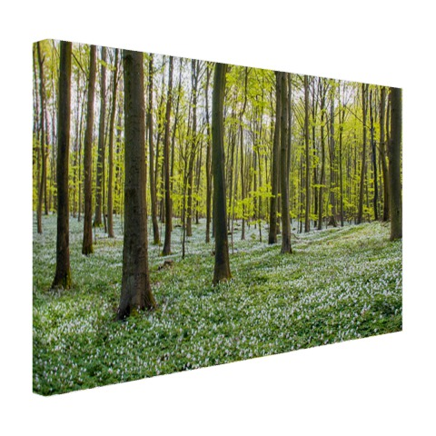 Foto bos in de lente op canvas