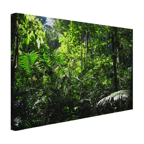 Regenwoud Brazilie fotoprint Canvas