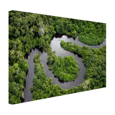 Regenwoud en Amazone Brazilie Canvas