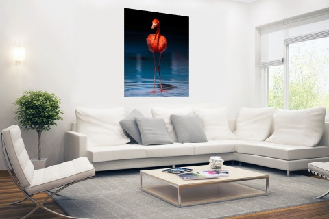 Flamingo donkere achtergrond Poster
