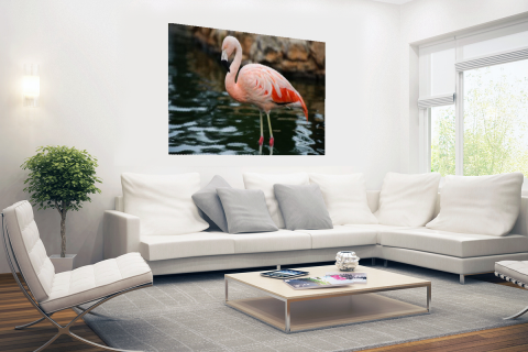 Flamingo in water voor rotsen Poster