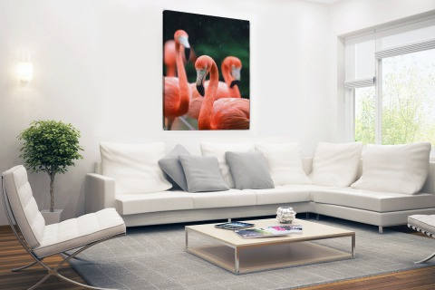 Flamingos in de regen Canvas
