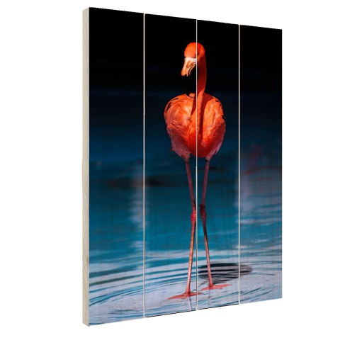 Flamingo donkere achtergrond Hout