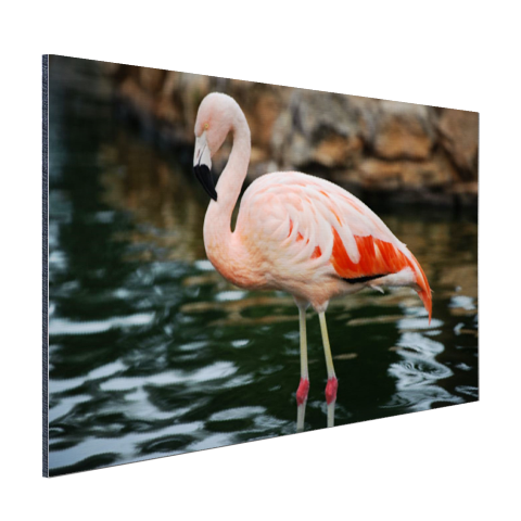 Flamingo in water voor rotsen Aluminium
